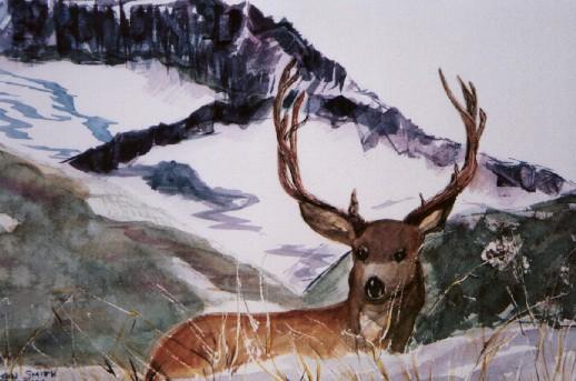 deer_in_snow.jpg